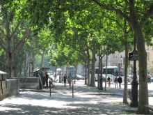 Street trees long the Quai De Conti in Paris. Photo by Donna L. Long.